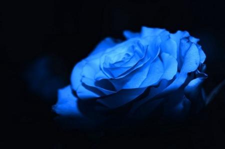 Цветы для мужчин. Что дарить?