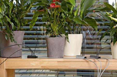 Удобный полив горшечных растений