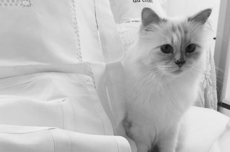 Кошка Лагерфельда стала жертвой хакеров