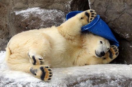 """Модный фотоконкурс: """"Белый медведь в кадре""""."""