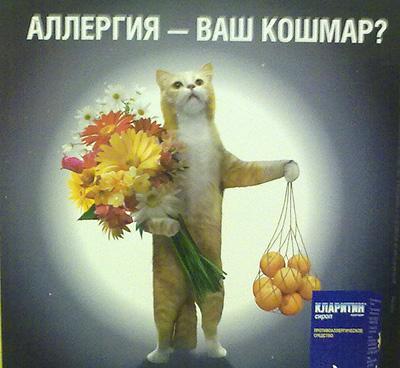 Реклама кот аллергия