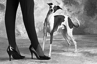Почему собака вертит хвостом?
